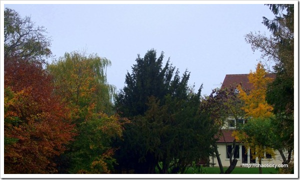 fading colours of autumn